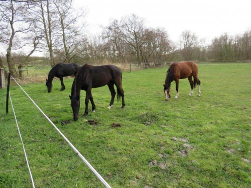 Paarden in het weiland naast de caravan